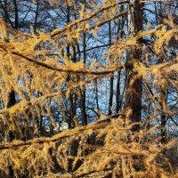 Пушистая осень :: Света Дракина