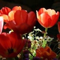 тюльпаны :: Таня Миронова