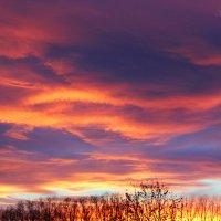 Тюменское небо :: Ekaterina Poluektova