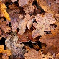 Осень под ногами :: Анжелика Засядько