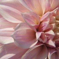 Просто цветок :: Светлана Сироткина