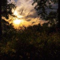 В лучах заходящего солнца :: Игорь Guess Who