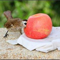 Большое красное яблоко :: DimCo ©