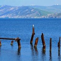 Чёрное море. Большой Утриш. :: Алексей Пышненко