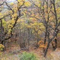 осень в лесу :: valeriy g_g