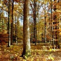 В буковом лесу :: Tatjana Savelev