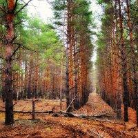 Осенний лес :: Александр Афромеев