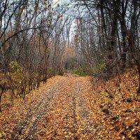 Глубокая осень :: Александр Афромеев