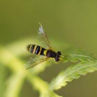 насекомыш :: Евгения Спиридонова