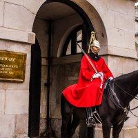 Horses may kick :: Юля Голубцова
