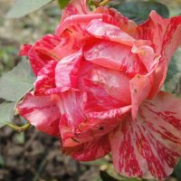 цветочки :: Екатерина Фролова