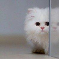 cat :: Ayman sadstar