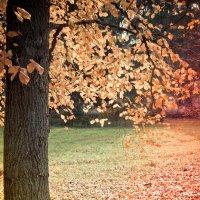 разноцветная осень :: Kudryasha Kudryasha