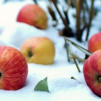 яблоки на снегу :: Олег Петрушов