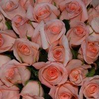 розовый букет :: Светик Ногих