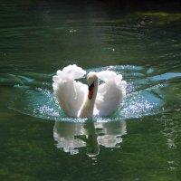 Лебедь :: Сергей Филимонов
