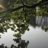 Озеро :: Светлана Сироткина