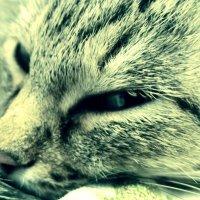 Cat :: Kanat Yes