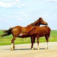 две коняшки :: Ирина