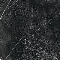 ночь :: Дарья Вега