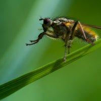 Коварный мух :: Ramunas Einoris