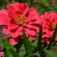 макро, цветы красные :: Маргарита Подделкова