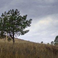 пейзаж :: валерий киреев