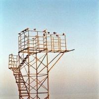 чайки :: Юля Каратунова