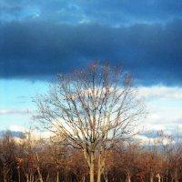 Осень :: Сурикат Сусликов