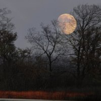 Луна :: Александр Бодягин
