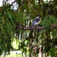 Птица счастья завтрашнего  дня... :: ФотоЛюбка *