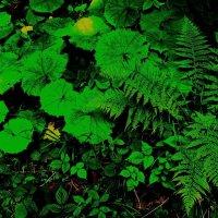 тихо в лесу, :: Богдан Вовк