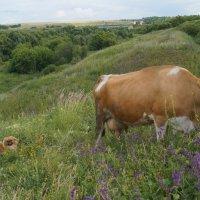 Корова и пастух :: Александра