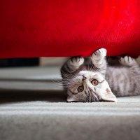 cute little cat wide :: Ayman sadstar