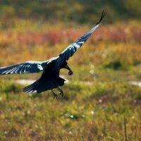 Взлетаем....или приземляемся??? :: ФотоЛюбка *