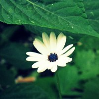 Белый цветок :: Illinois c.