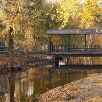 Осень в парке :: Елена Сметанина