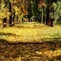 На старость осень так похожа :: Елена Сметанина