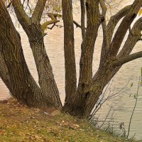 Дерево у реки. :: Nonna