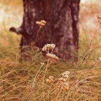 Золотая травинка :: Елена Сметанина