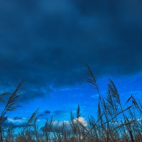 Прощание с осенью :: Сергей Дубинин