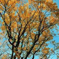 Золотые краски осени :: Viacheslav Birukov