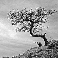 На всех ветрах :: Андрей Попович
