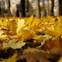 осень не спросит :: Liza Popova