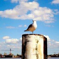 Птичку жалко... :: Arman S