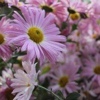 цветы :: Alena Cyargeenka