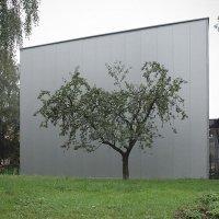 Одинокая яблонька :: Георгий Столяров