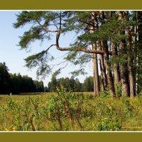 Флора в павловском парке :: vadim