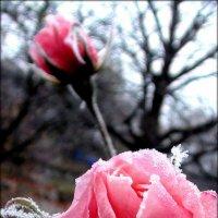 Первый мороз :: Zenon F.
