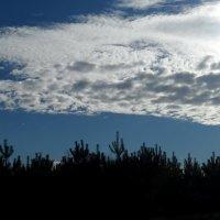 облако над лесои :: Наталия Шляхтова